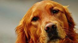 Esta perra abraza a los desconocidos que se encuentra por la
