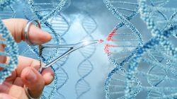 La edición genética da dos nuevos pasos hacia la curación de