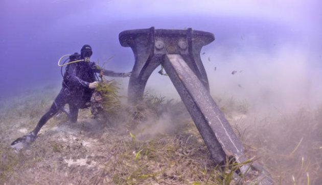 Yates contra el ser vivo más antiguo del planeta: apadrina la