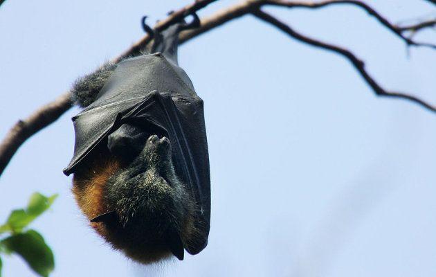 Encuentran murciélagos en las ensaladas vendidas por esta gran