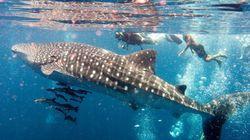 Cuenta atrás para las cero extinciones de especies marinas
