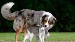 Taiwán prohíbe por ley el consumo de carne de perro y