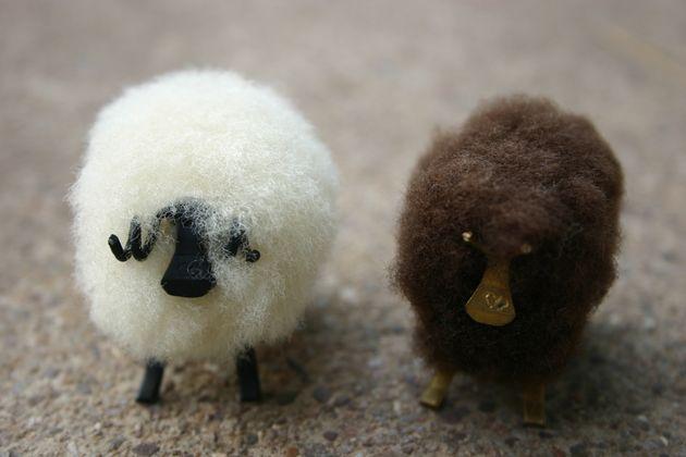 9 ventajas de ser una oveja