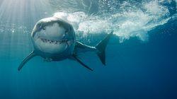 Muere una adolescente por el ataque de un tiburón delante de su familia en