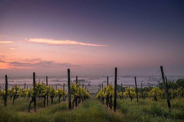Lo que esconden los aromas del vino y no eras capaz de