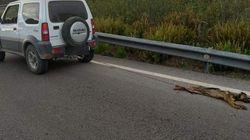 Detenido por matar a un cachorro al arrastrarlo varios kilómetros atado a su