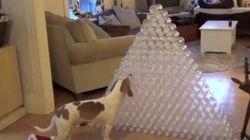 El mejor regalo navideño posible para un perro