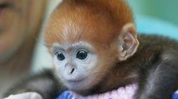 Bebés monos muuuuuy monos