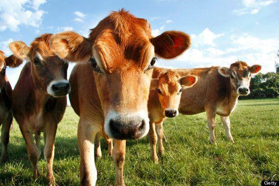 Echar la siesta y otras ocho lecciones vitales que los animales pueden