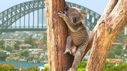 Viajar a Australia: ¿vale la pena tanto