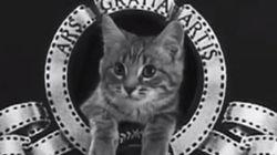 Festival mundial de LOLcat: descubre el ganador y todos los vídeos del