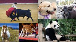 El PACMA propone aprobar una ley general de protección animal para acabar con la disparidad entre