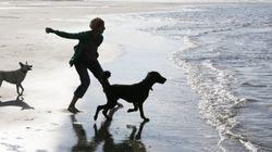 Por qué tener una mascota en casa es bueno para