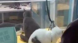 Indignación por esta máquina para atrapar gatos