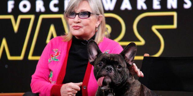 El perro de Carrie Fisher protagoniza un cameo adorable en 'Star Wars: Los últimos