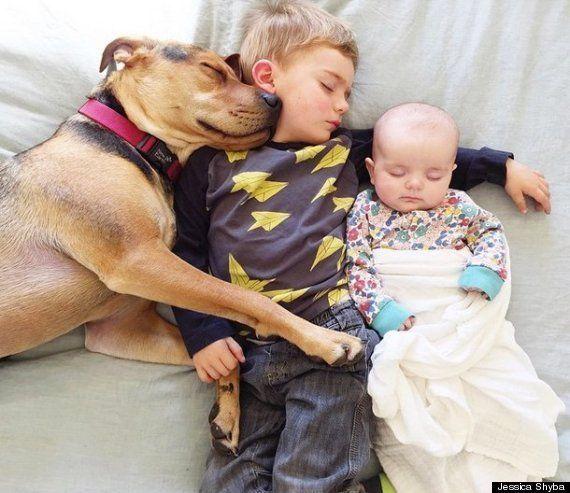 El perro y el niño que dormían la siesta juntos han crecido... y tienen compañía