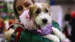 El PP lleva al Congreso una modificación del Código Civil para considerar a las mascotas seres vivos y no