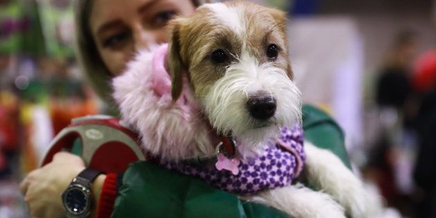 El PP lleva al Congreso una modificación del Código Civil para considerar a las mascotas seres vivos...