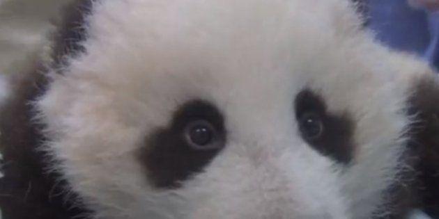 Vídeos de animales: los mejores y/o más virales de 2012