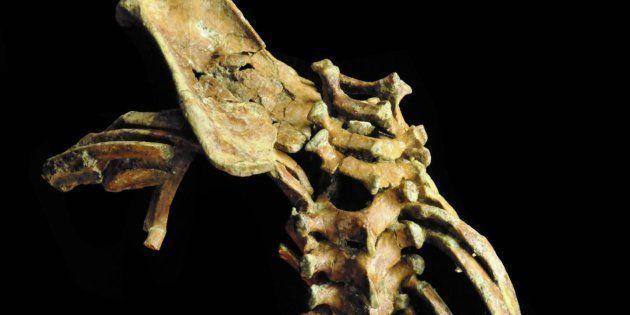 La columna vertebral que nos permitió correr tiene al menos 3,3 millones de
