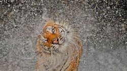 Las mejores fotos National Geographic 2012