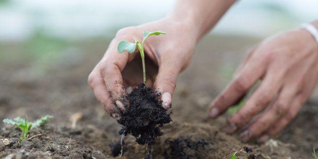 La investigación multidisciplinar en materia de alimentación sostenible: una necesidad