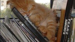 Los bichinos de la semana: gatos reinventando la siesta