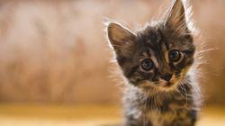 Tu obsesión por los gatos es buena para la salud. Estas son las razones