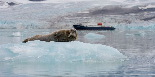 Los glaciares del océano Ártico sufren los efectos del calentamiento