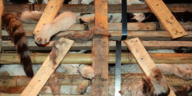 Gatos hambrientos, deshidratados y camino del matadero en China... salvados por accidente