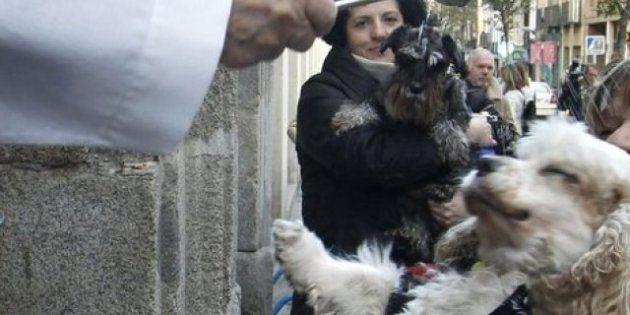 Bendición de animales por San Antón: camaleones, cabras, perros, hurones y gatos en la iglesia