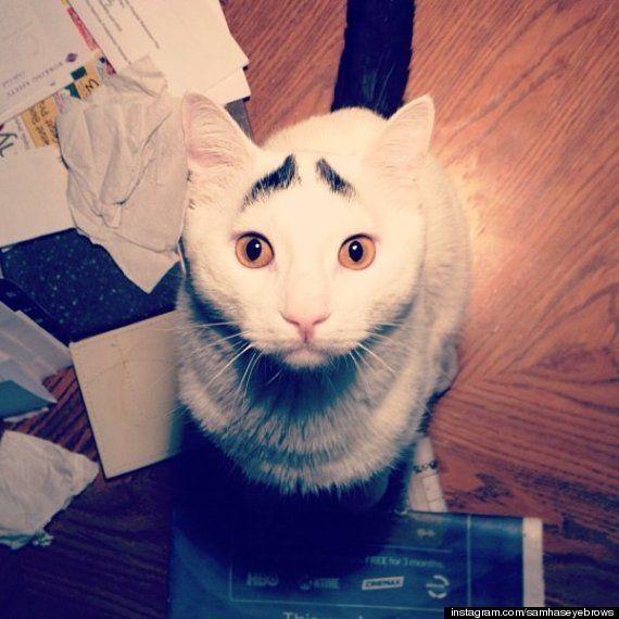 Sam, el gato con cejas: nueva estrella gatuna en Instagram