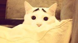 ¡Mira, un gato con cejas en Instagram!