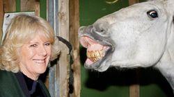 Los bichinos de la semana: animales que se dejan ver con famosos