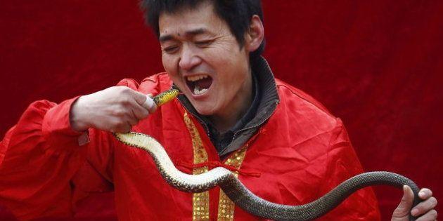 Serpiente por la nariz para celebrar el año nuevo chino