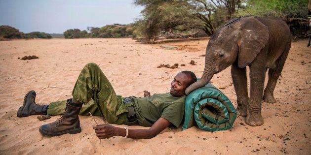 Las impresionantes fotos de las tribus de Kenia salvando a crías de