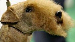 29 cosas que pasan en los concursos de belleza canina