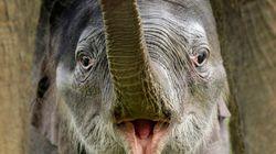 11 datos que cabrearán a cualquier amante de los animales