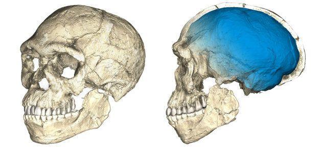 El homo sapiens es 100.000 años más viejo de lo que se