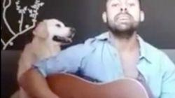 Detenido el cantautor 'Javo' por simular su propia