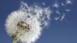 11 claves para afrontar la alergia al polen esta
