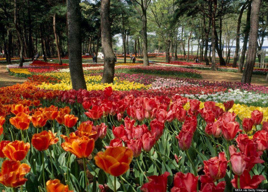 Este parque de Japón se convierte en un mar de flores azules