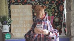 'Tu perrito' o cómo concienciar sobre la adopción de animales con la canción del