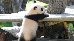 Detenidos dos empleados del Zoo de Madrid que estafaron un millón de euros con la venta de