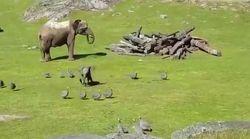 El comportamiento de este elefantito encandila en redes