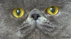 Primeros planos de gatos