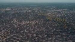 La devastación del incendio de Moguer, a vista de
