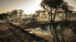 Dan por controlado el incendio forestal en el entorno de