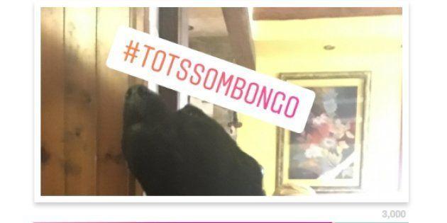 La historia del perro Bongo: