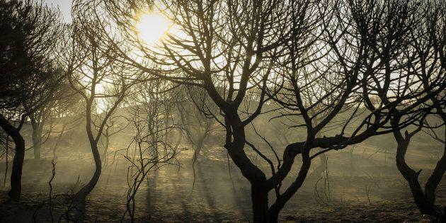 Paraje de Cuesta Maneli tras el incendio declarado el pasado sábado en 'La Peñuela' de Moguer